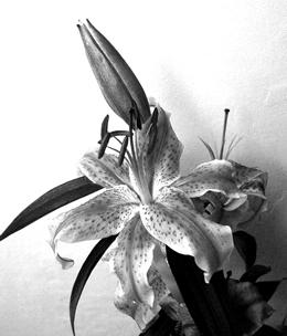 CRUSHfanzine-Secret-Crush-Flower