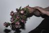 CRUSHfanzine-Women-We-Love-Flowers-2