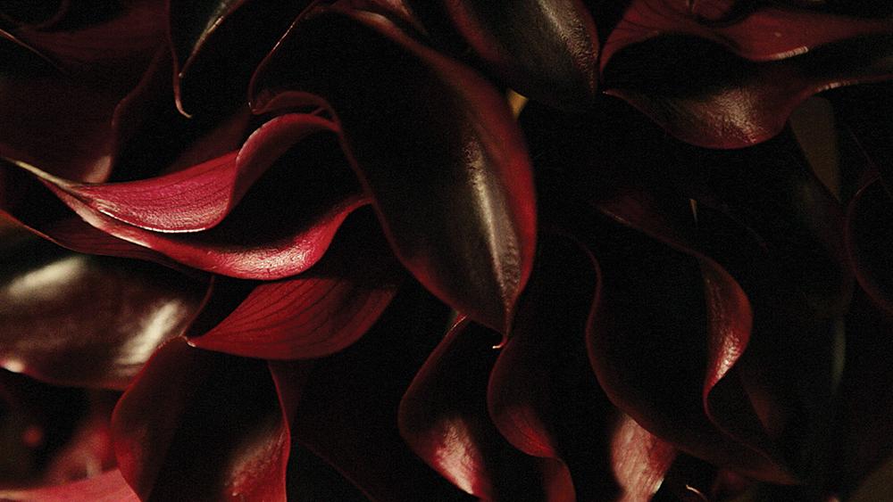 crushfanzine nicolas cogrel flowers interview photo by matt gunther